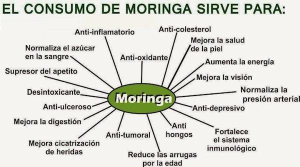 Beneficios de la planta de Moringa en la salud