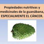 La Guanábana y sus propiedades Medicinales
